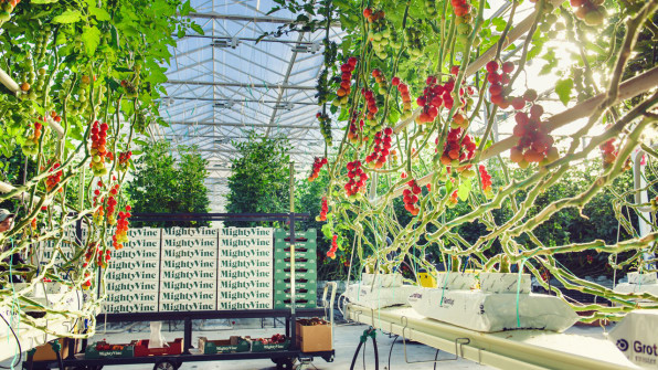 1-a-chicago-area-greenhouse-has-perfected-the-art-of-growing
